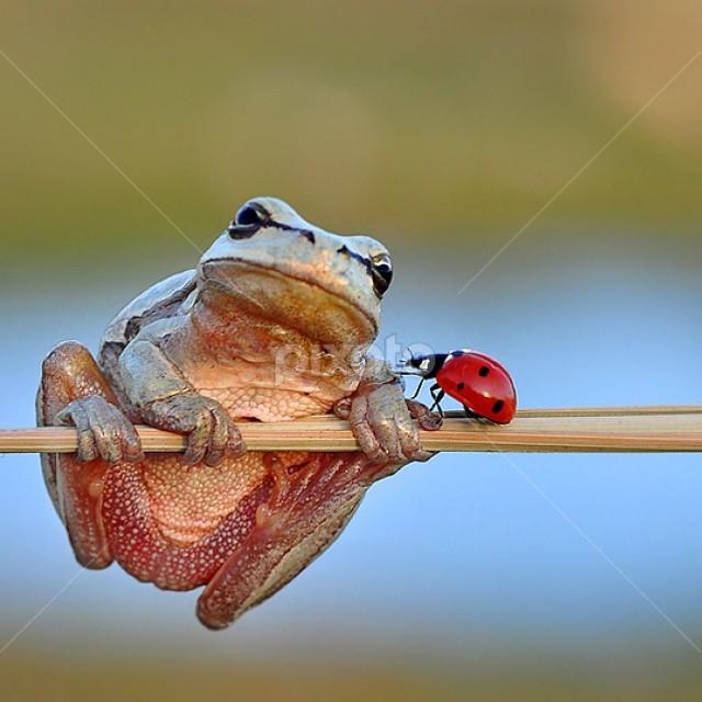 Gözgöze by Mustafa Öztürk - Animals Amphibians