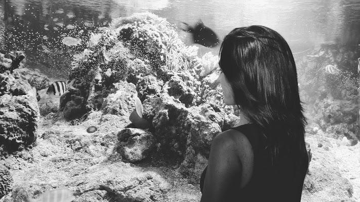 Natura viva dietro il vetro di Sinapsi