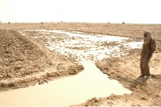 Photo: Timbuktu, Mali, West Africa. 2008. In traditional nurseries the land is hand plowed with a hoe, then the seeds are broadcast and covered with manure, and last the surface is irrigated. [Photo by Erika Styger]