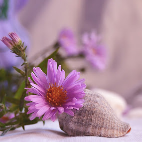 Autumn colors purple by Neli Dan - Artistic Objects Still Life ( shell, autumn color, flower,  )