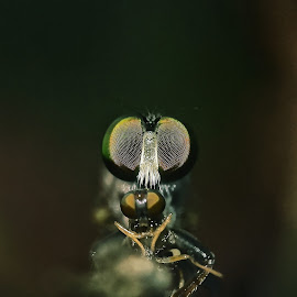 macro  by Rajesh Mondal - Instagram & Mobile Android ( mobilography )