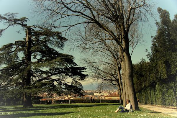 Leggendo... a piedi nudi nel parco di Francesca Malavasi