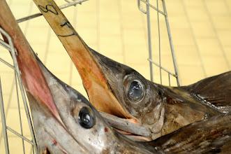 Photo: italienischer Fischmarkt