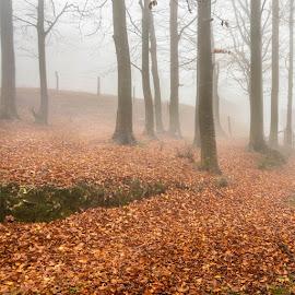 Forest. by Darijan Mihajlovic - Landscapes Forests