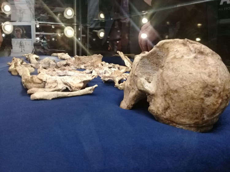 Unveiling of the skeleton of Little Foot at Wits University on December 6. Picture: NALEDI SHANGE