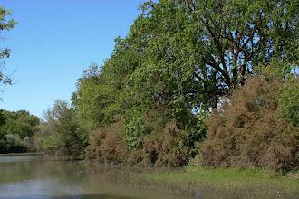 Photo: Putah Creek - South Fork at Mace Blvd