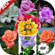 Download Best Flowers - Live Wall Romantic Flowers Animated For PC Windows and Mac