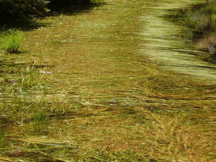 Una Stra sull'acqua di gianky