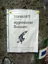Photo: Aggressiver Bussard!