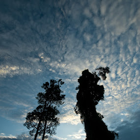 Dominant Tree by Gustaman Syah - Landscapes Forests