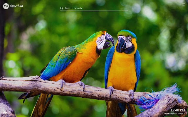 My Exotic Birds HD Wallpapers New Tab Theme