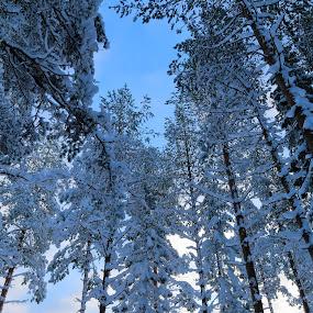 Stretch by Juliusz Wilczynski - Nature Up Close Trees & Bushes (  )