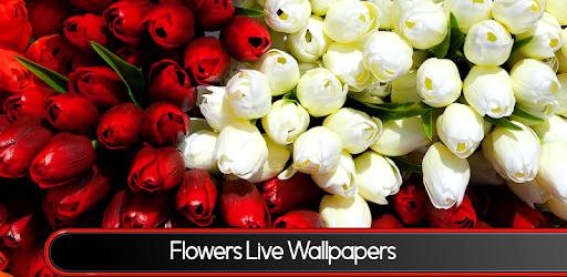 картинки на рабочий стол на весь экран цветы самые красивые живые обои тюльпаны банк открытие рефинансирование кредитов отзывы 2020