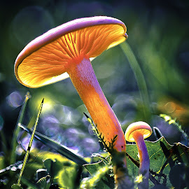 by Darrell Raw - Nature Up Close Mushrooms & Fungi ( staff favorites, blue, orange. color )