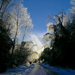 Ice Storm by Hugh Hazelrigg - City,  Street & Park  Street Scenes ( winter, ice storm, nature, backlight, forest, , #GARYFONGDRAMATICLIGHT, #WTFBOBDAVIS )