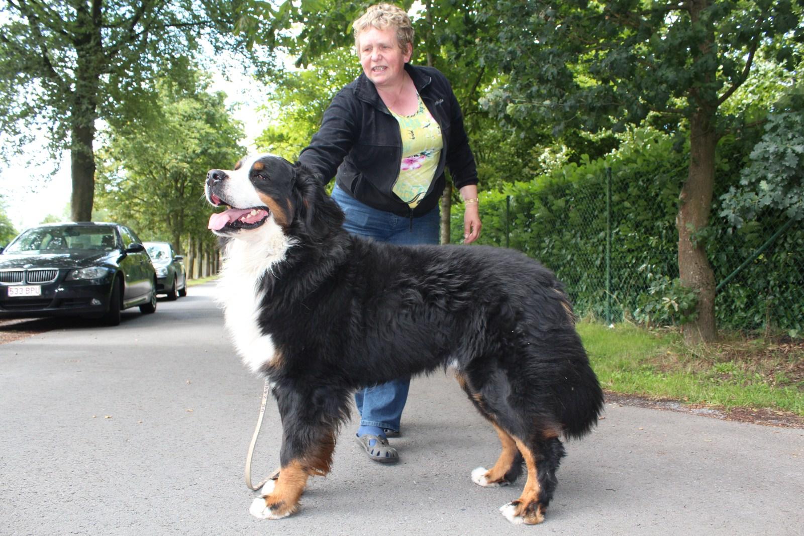 Photo: Isidoor een trotse, lieve, mooie reu. Hier te zien met zijn eigenaar.
