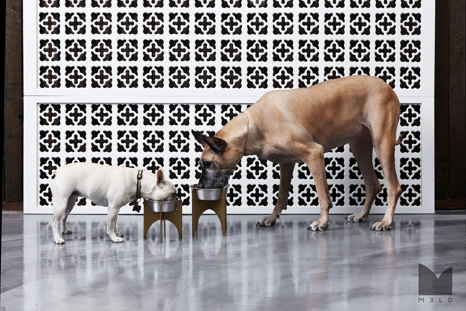 M3LD Heavy Pet Dish Lifestyle.jpg