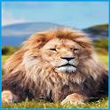 Sư tử hình nền icon