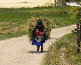 Photo: A local near Incapura bringing home hay she likely cut herself for her animals.
