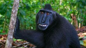 The Funkiest Monkeys thumbnail