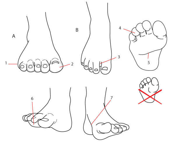 Details of the foot seen frontally