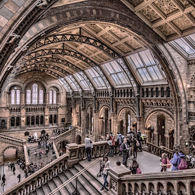 The Natural History Museum by Jan Murphy - Buildings & Architecture Public & Historical ( railings, stairs, hdr, arches, windows, architecture, museum, people, historic,  )