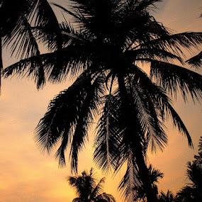 by Shatoddruh Saha - Landscapes Sunsets & Sunrises ( #skyporn, #nikonphotography, #sunset, #tree, #orange )