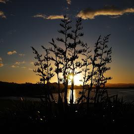 Sunset over Puketirini Lake by Teodora Motateanu - Landscapes Sunsets & Sunrises