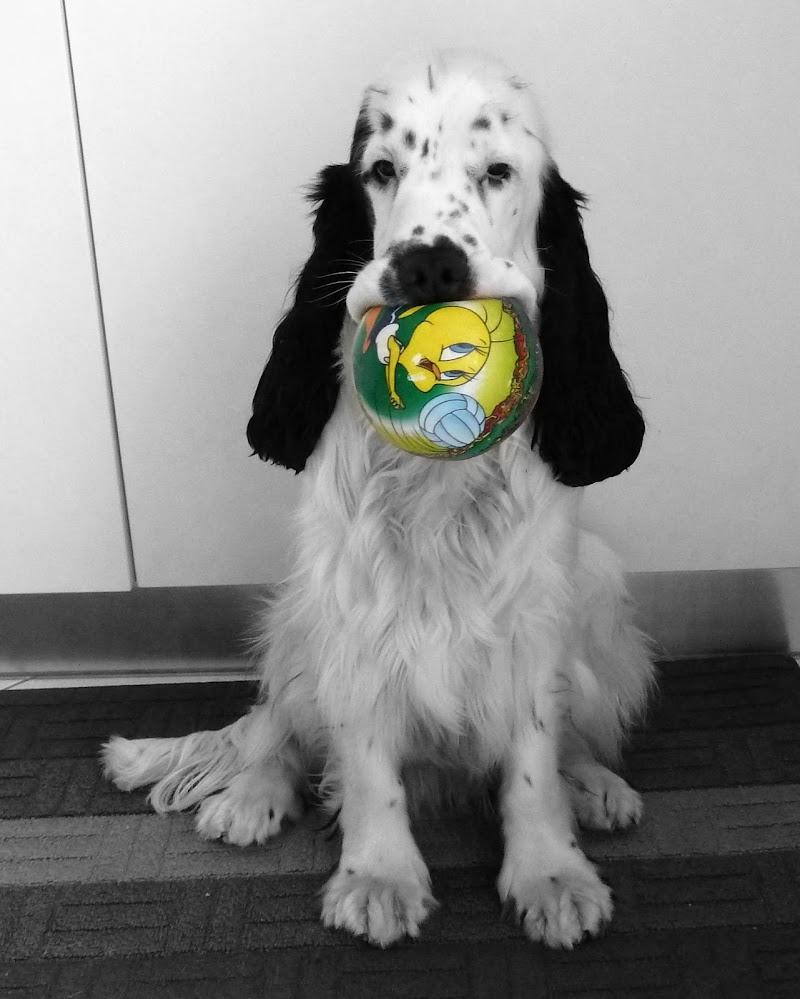 La palla è mia! di Piera
