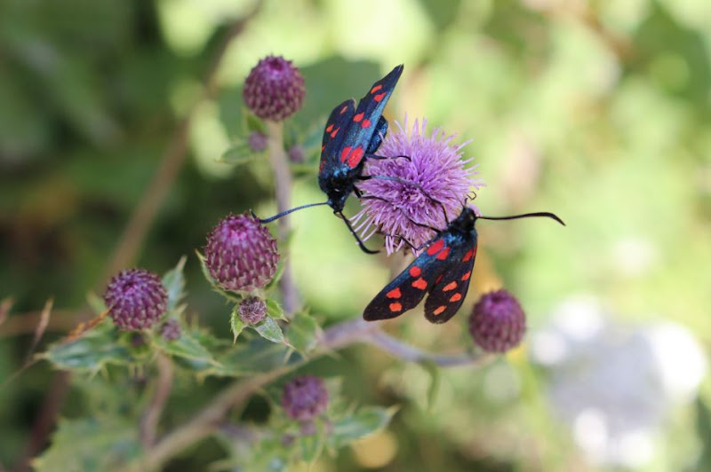 farfalle...... a pois di Gilda Bellicoso