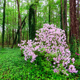 Springtime in North Carolina by Michael Villecco - Nature Up Close Trees & Bushes (  )