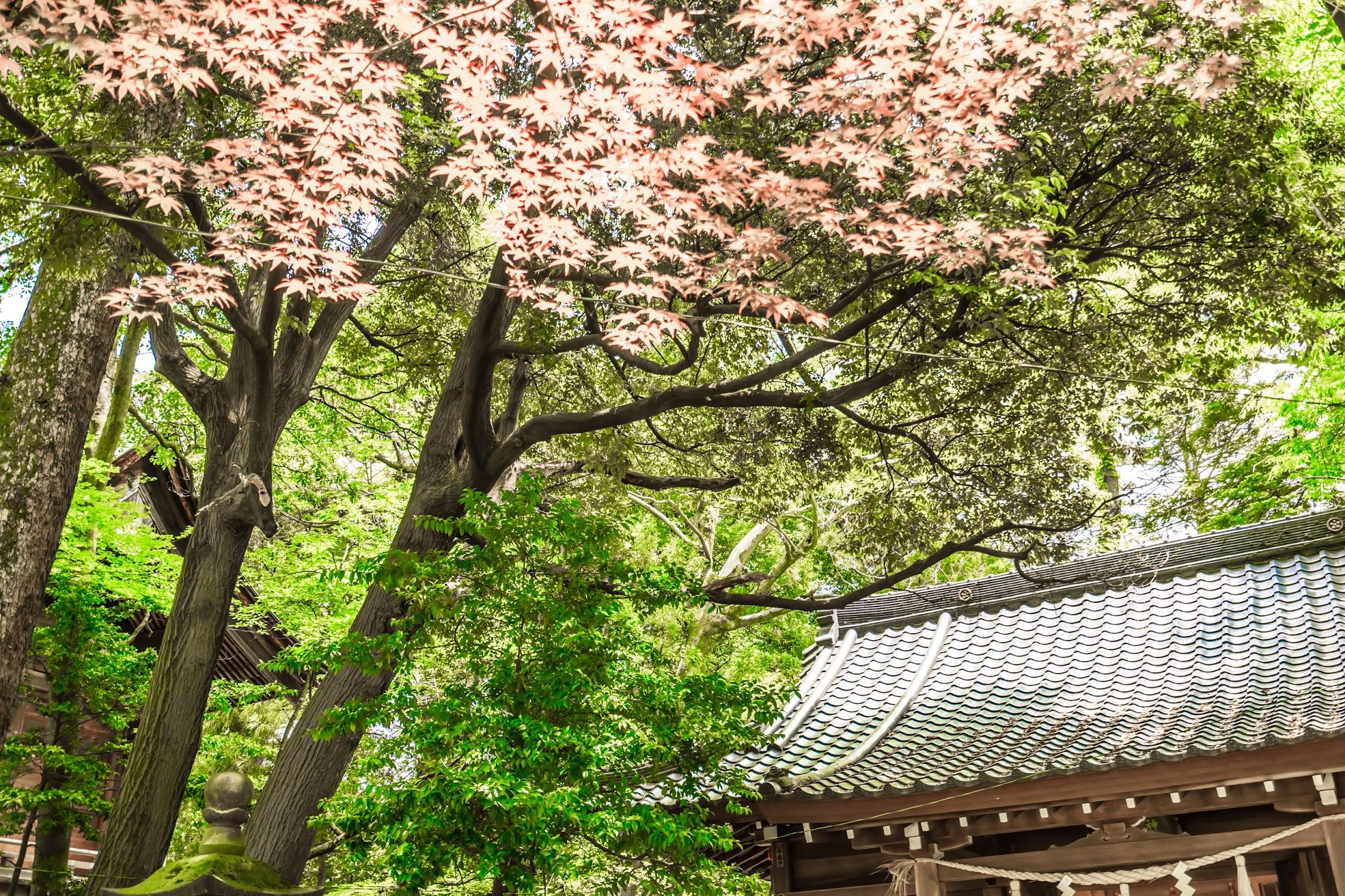 金沢 尾山神社 紅葉1
