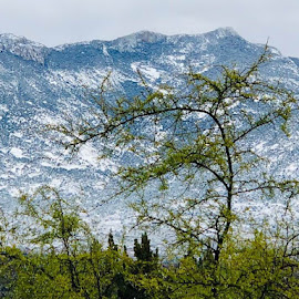 Tree Mountain by Lori Fix - Landscapes Mountains & Hills