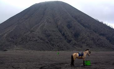 Photo: Horse in the Bromo caldera