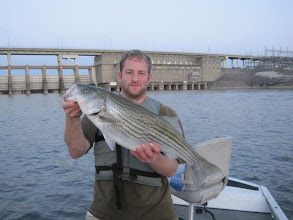 Photo: April 12, 2012 - Guide Sam Simons with a hard-fighting striper.
