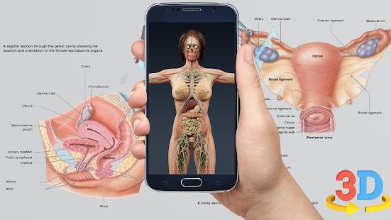 Human 3d Anatomyorgans And Bones Apps Bei Google Play
