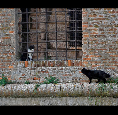 Romeo e Giulietta di xc75rb