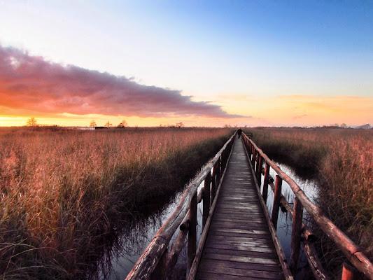 Fuga nell'oasi di Luca Bertolacci