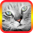 Translator for Cats - Cat Translator file APK for Gaming PC/PS3/PS4 Smart TV