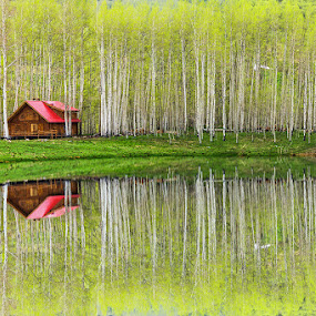 Cabin by Qing Zhu - Landscapes Waterscapes ( water, cabin, reflection, forest, pond )