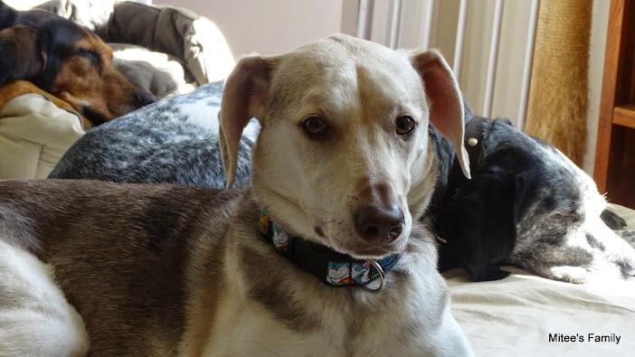 Caresser son chien - Page 3 0uIc5tencqZmzuOfQA-nPUlRlD75uUVKM6Vl3wID7vwI=w702-h395-no