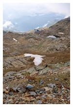 Photo: Camoscio in Alta Valsesia.