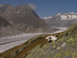 Photo: Chamoix skull and the Aletsch glacier