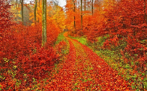 Free Fall Cell Phone Wallpapers Autumn Wallpaper Android Apps On Google Play