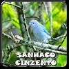 Sanhaco Cinzento Completo APK