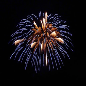 Fireworks  by Michele Williams - Public Holidays July 4th