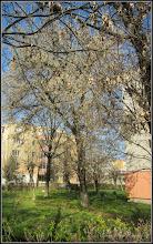 Photo: 2016.03.30 - de pe Calea Victoriei