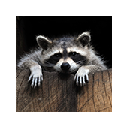<b>Raccoons</b> Wallpapers FullHD <b>Raccoon</b> New Tab