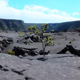 Kiluea Iki Crater by Jeff Juntilla - Landscapes Travel ( hawaii, volcanoes, fujifilm, hiking, travel, national parks )