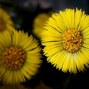 Cvijet by Sead Kazija - Nature Up Close Flowers - 2011-2013